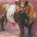 Zeus  Red Belted Galloway Bull by Mark Adlington