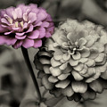 Zinnia Flower Pair by Smilin Eyes  Treasures