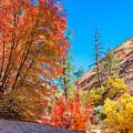 Zion Autumn Colors by John M Bailey
