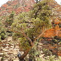 Zion Hike 1 View 1 by Robert Meyers-Lussier