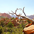 Zion Hike 1 View 4 by Robert Meyers-Lussier
