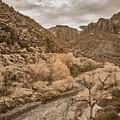 Zion Landscape  by Jim Cook