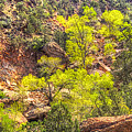 Zion National Park Small Tributary Of The Virgin River by Roger Passman