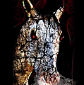 Zombified Horse by Gravityx9 Designs