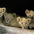 Four Cubs by Linda D Lester