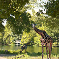 Zoo Landscape by Steve Karol