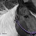 Zorro by AnnaJanessa PhotoArt
