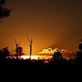 Zuni Mountain Gold  by Rudy Gallegos