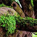 Angel Oak Tree Branches by Louis Dallara
