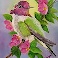 Anna's Hummingbird by Sandra Maddox