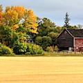Autumn Barn by David Matthews