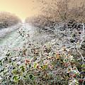 Autumn Frosts by Alex Lim