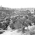 Bethlehem 1886 by Munir Alawi