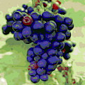 Blue Grape Bunches 6 by Cathy Lindsey