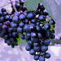 Blue Grape Bunches 7 by Cathy Lindsey