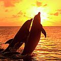 Bottlenose Dolphins by Tier Und Naturfotografie J Und C Sohns