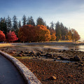 Colorful Autumn Foliage At Stanley Park by Andy Konieczny