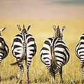 Common Zebra Behinds by James Warwick