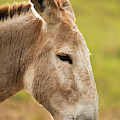 Donkey Out In Nature by Rob D Imagery