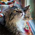 Feline Stare by Jean Noren