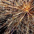 Fireworks by William Norton