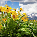 Flowers Blooming In The Tetons by Michael Chatt