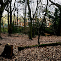 Forest Trees In Highgate Woods 63 by Artist Dot