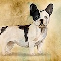French Bulldog by John Edwards