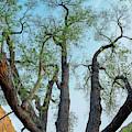 Giant Cottonwood by Leland D Howard