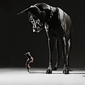 Great Dane And Chihuahua Staring At One by Lauren Burke