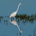 Great Egret by Ken Stampfer