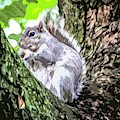 Grey Squirrel by Nigel Dudson