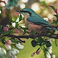 Harbinger Of Spring by Pixabay