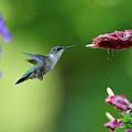 Hummingbird Heaven by William Jobes