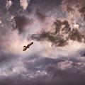 In Flight by Leland D Howard