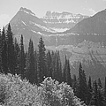 In Glacier National Park by Buyenlarge