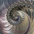 Inside A Seashell by Erika Fawcett