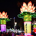 Large Lanterns In The Shape Of Lotus Flowers by Yali Shi