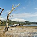 Loch Morlich, Cairngorms by David Ross