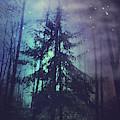 Luminous Forest by Dirk Wuestenhagen