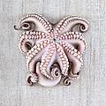Octopus by Fausto Favetta Photoghrapher
