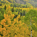 Owl Creek Pass Road Fall Colors by Ray Mathis