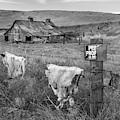 Palouse Barn 9901 by Bob Neiman