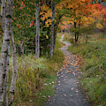 Pathway Through Autumn's Colors by Darylann Leonard Photography