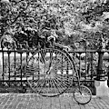 Penny Farthing And A Squirrel by Rob Hans