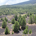 Photography Landscape Shot From The Etna National Park On Sicily by PM Artistic