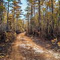 Pine Barrens Burn by Louis Dallara