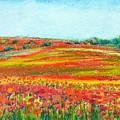 Poppy Fields by Asha Sudhaker Shenoy