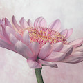 Pretty In Pink by Sandi Kroll