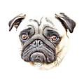 Pug by Russ Carts